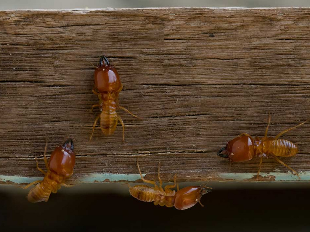 Stop Termites Before They Destroy Your Property